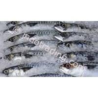 Jual Ikan Segar