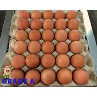 Jual Telur Ayam Grade A
