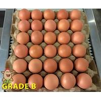 Jual Telur Ayam Grade B
