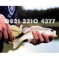 Alat Peraga Tagging Ikan