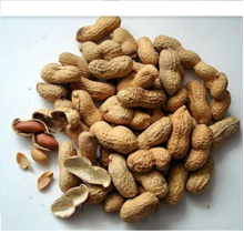 Kacang Sangrai