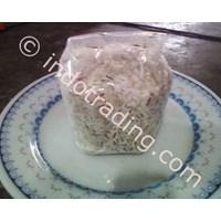 Seedlings F3 Oyster Mushroom