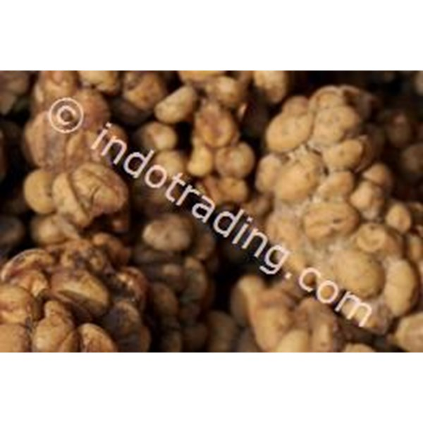 Civet Coffee Arabica Lintong