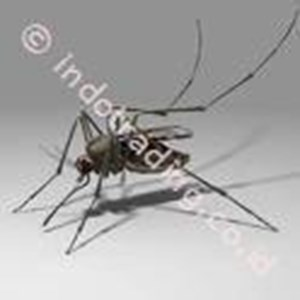 Jasa Pest Control By CV. Orina Jaya Abadi