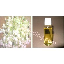 Oil Jasmine Absolute