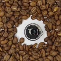 Coffee Robusta Extract