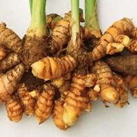 Curcuma Longa (Turmeric Root Oil)