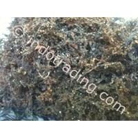 Sargassum Seaweed 1