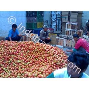 Export Tomato Indonesia