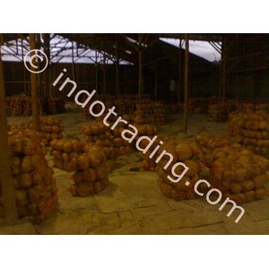Export Cabbage Indonesia