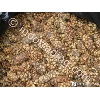 Luwak Coffee Robusta West Lampung Cheap 5