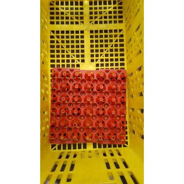 Tray Tempat Telur Peternak Ayam Chicken Egg Plastik