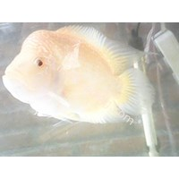 Sell Live Tropical Fish Wholesale 2
