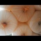 Bubble wrap  sidoarjo 4