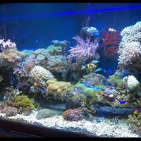 Aquarium Air Laut (Akuarium & Aksesoris) 1