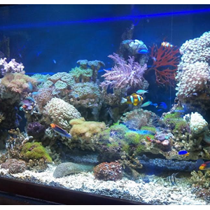 Aquarium Air Laut (Akuarium & Aksesoris)