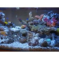 Jual Aquarium 1 meter  -   Akuarium & Aksesoris 2