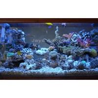 Aquarium 1 meter  -   Akuarium & Aksesoris 1