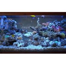 Aquarium 1 meter  -   Akuarium & Aksesoris
