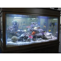 Aquarium 1.5 meter  -   Akuarium & Aksesoris 1