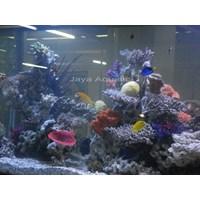 Jual Aquarium 1.5 meter  -   Akuarium & Aksesoris 2