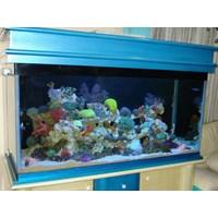 Aquarium 1.55 meter  -   Akuarium & Aksesoris 1