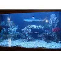Jual Aquarium Hiu  -   Akuarium & Aksesoris  2