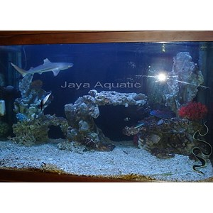 Aquarium Hiu  -   Akuarium & Aksesoris