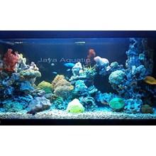 Dekorasi aquarium Graha Family  -   Akuarium & Aksesoris