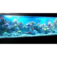 Aquarium 2 meter  -   Akuarium & Aksesoris 1