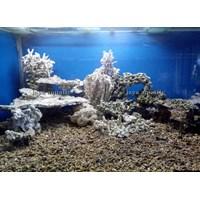 Dekorasi karang  -   Akuarium & Aksesoris Murah 5
