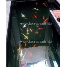 Upgrade kolam koi -   Akuarium & Aksesoris