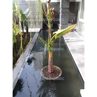 Kerta Jaya Regency  -   Akuarium & Aksesoris 1