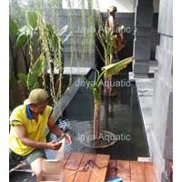 Distributor Kerta Jaya Regency  -   Akuarium & Aksesoris 3