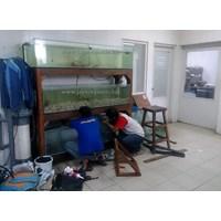 Jual Aquarium Display Restoran untuk ikan konsumsi 2