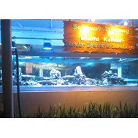 Distributor Aquarium Display Restoran  3