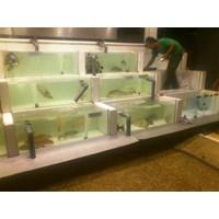 Jasa Pembuatan Aquarium Display  -   ( Akuarium & Aksesoris ) Murah 5