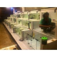 Beli  Jasa Pembuatan Aquarium Display  -   ( Akuarium & Aksesoris ) 4