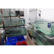 Resto Huang Table    ( Akuarium & Aksesoris )