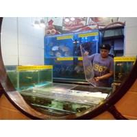 Distributor Daun Lada Resto - Galaxy Mall      ( Akuarium & Aksesoris ) 3