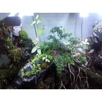 Paludarium ( Aquarium dan Aksesoris ) 1