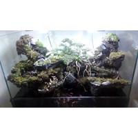 Jual Paludarium ( Aquarium dan Aksesoris ) 2