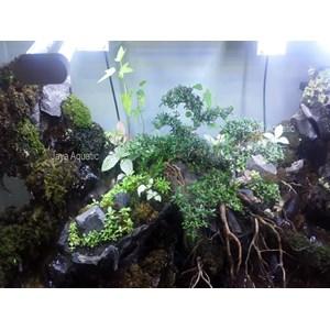 Paludarium ( Aquarium dan Aksesoris )