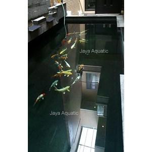 Kolam Koi Sams Bakery (  Aquarium dan Aksesoris)