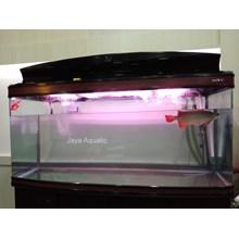 Aquarium arowana Intelkam Polda Jatim ( Aquarium dan Aksesoris)