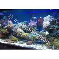 Jual Dekorasi Aquarium Air Laut  -  Akuarium & Aksesoris 2