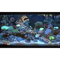 Distributor Dekorasi Aquarium Air Laut  -  Akuarium & Aksesoris 3