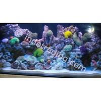 Dekorasi Aquarium Air Laut  -  Akuarium & Aksesoris 1