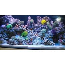 Dekorasi Aquarium Air Laut  -  Akuarium & Aksesoris