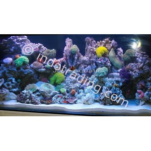 Jual Dekorasi Aquarium Air Laut - Akuarium & Aksesoris Harga Murah Surabaya oleh UD. Jaya Aquatic Surabaya